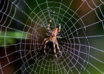 Örümcek İlaçlama Nasıl Yapılır?