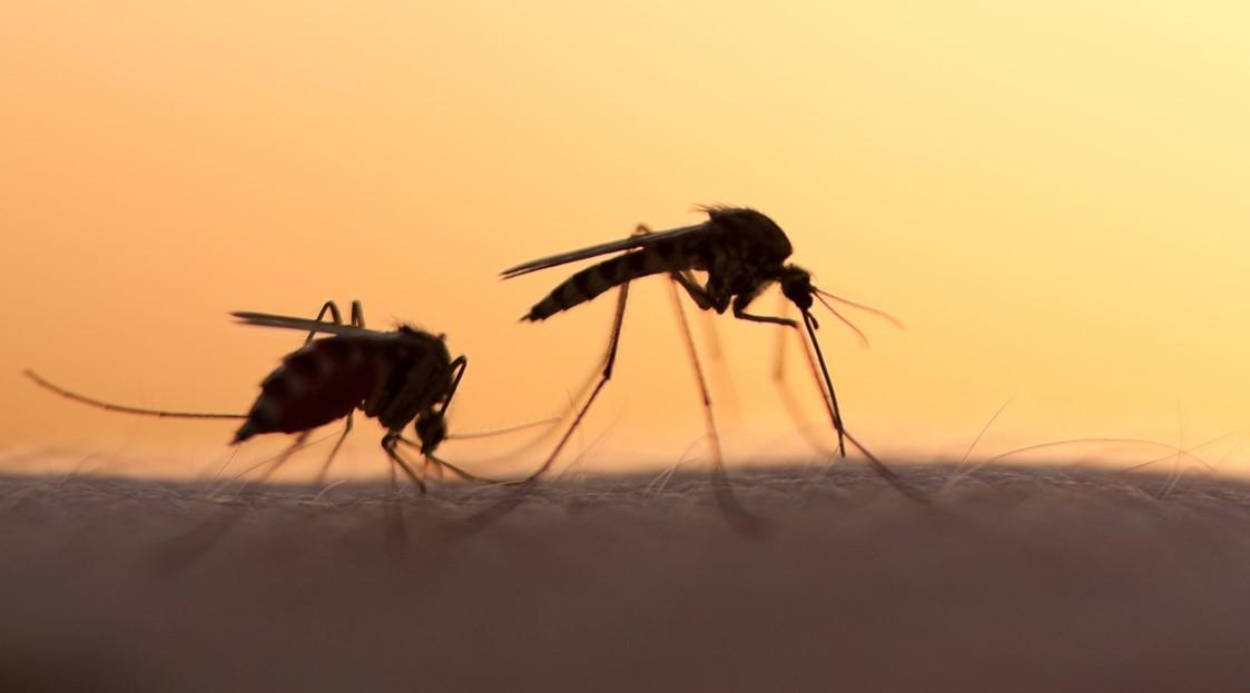Sivrisinek Alerjisi Nedir, Nelere Dikkat Edilmelidir?