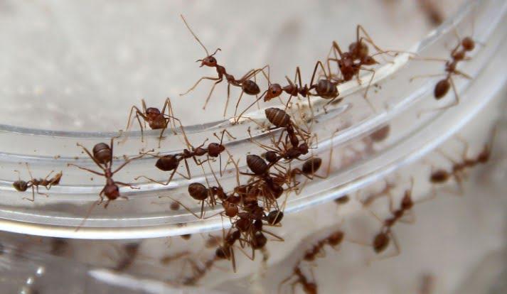 Karıncaları Evden Uzak Tutmanın Yolları